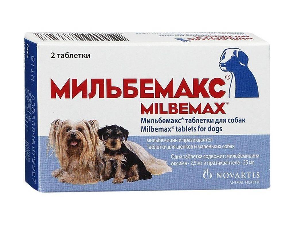 Мильбемакс для кошек: когда применяется, как давать, дозировка препарата