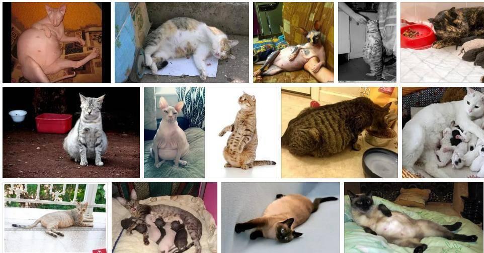 Почему нельзя убирать кошачий туалет беременным