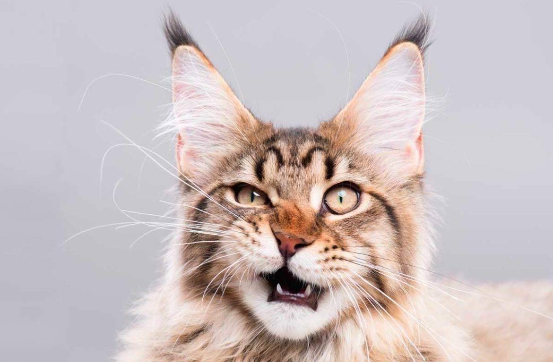Кошка не признаёт новое место для лотка