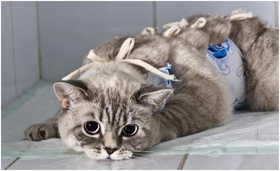 Чем лучше кормить кастрированного кота для его здоровья