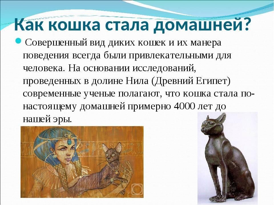 Откуда взялись на земле кошки, от кого они произошли и когда появились, кто является диким предком домашних питомцев?