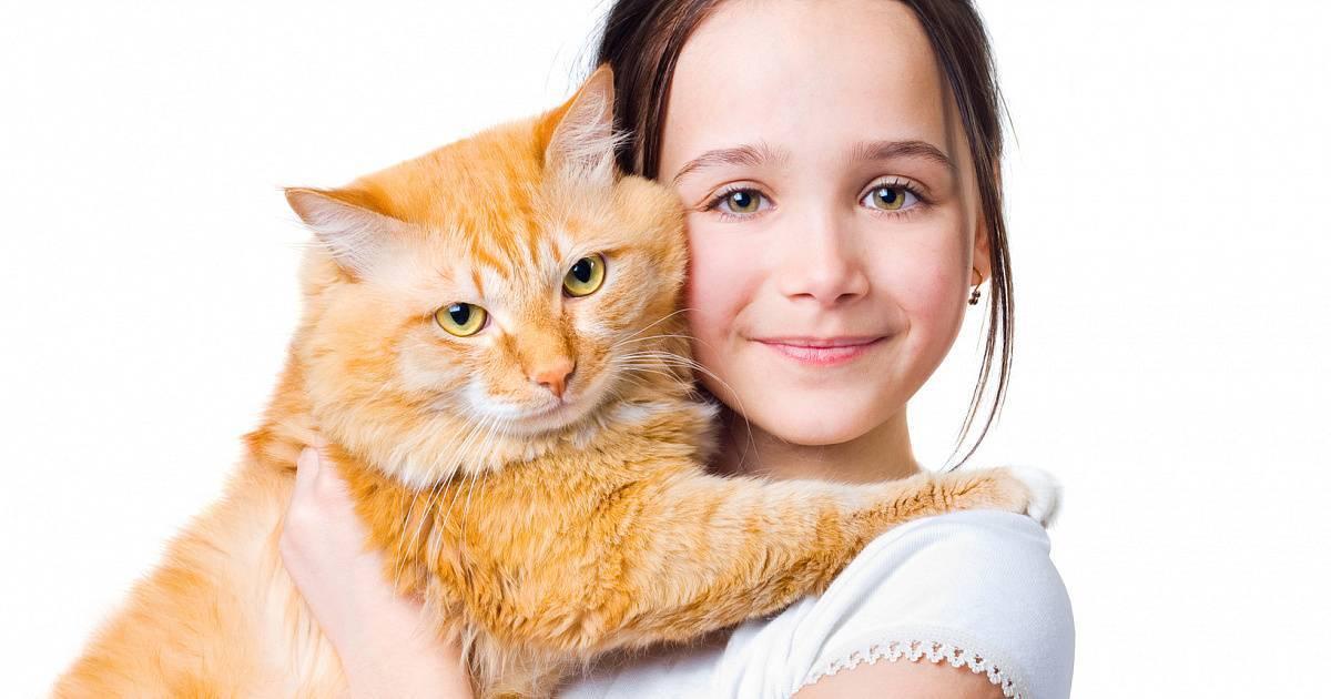 Почему нельзя таскать кота за шкирку: физиологические и психологические причины