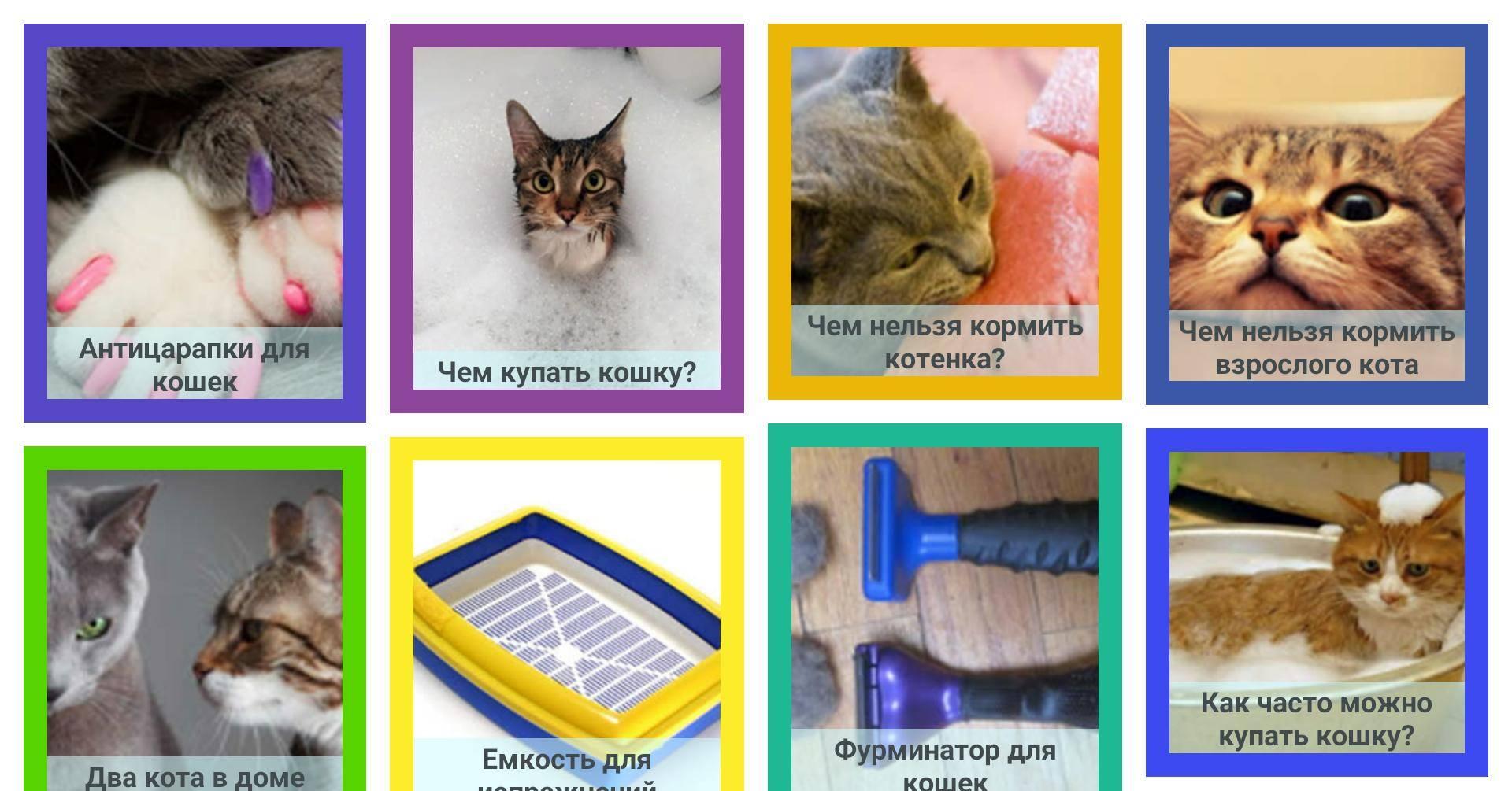Как приручить кота