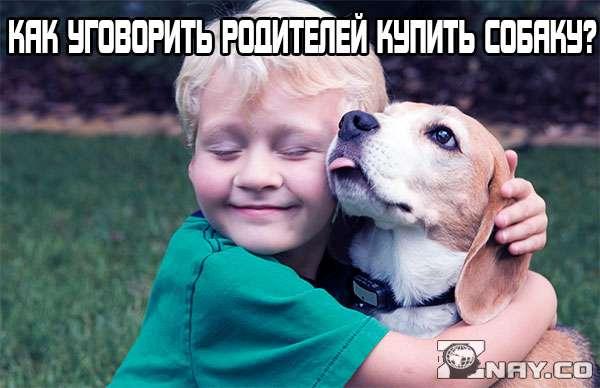Как уговорить родителей купить щенка, завести собаку