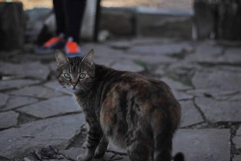 Дворовые кошки и коты: фото, породы