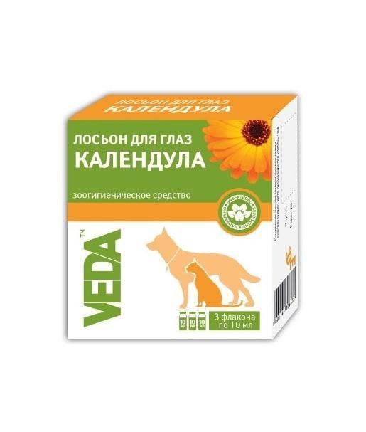 Растения и цветы для кошек: 10 лучших и безопасных растений для вашего питомца - petstime.ru