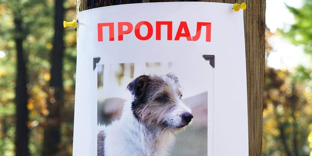 Бизнес-план ветеринарной клиники|ветеринарный центр|ветеринарные услуги