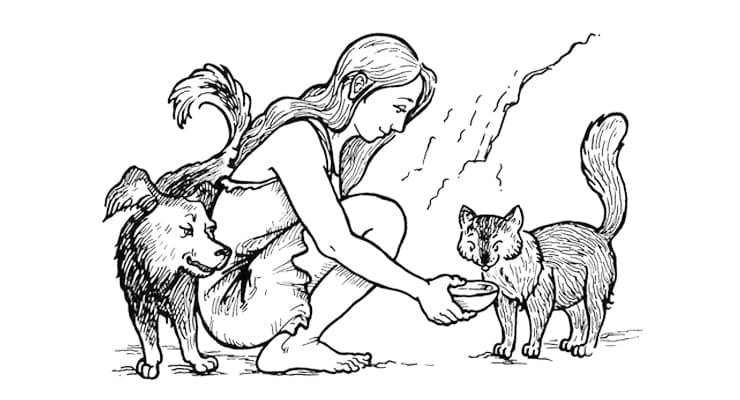 О том как кошка приручила человека