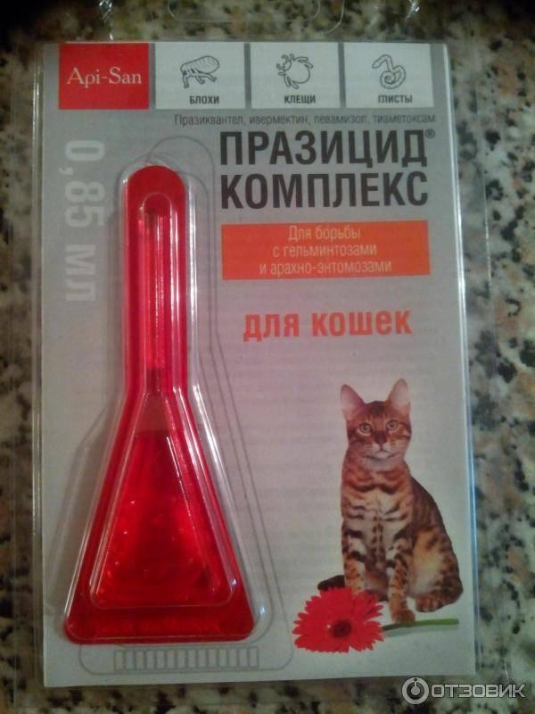 Капли на холку от глистов у кошек: популярные и эффективные препараты