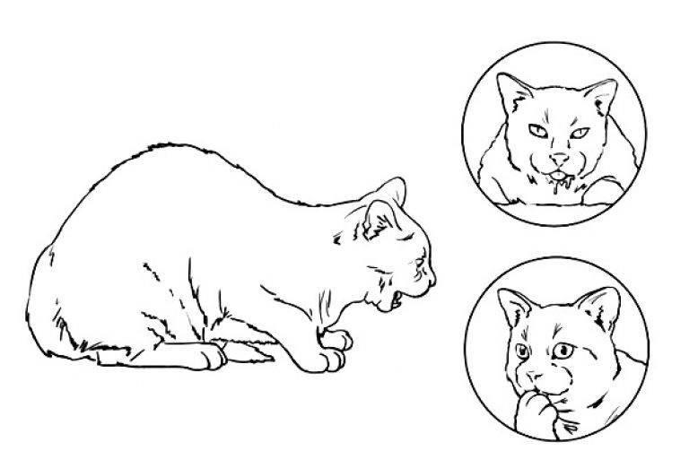 Кошка кашляет и хрипит как будто подавилась. что делать?