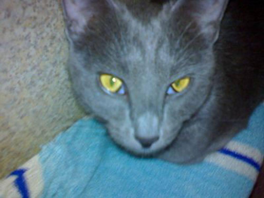 Пленка на глазах у кошек. третье веко