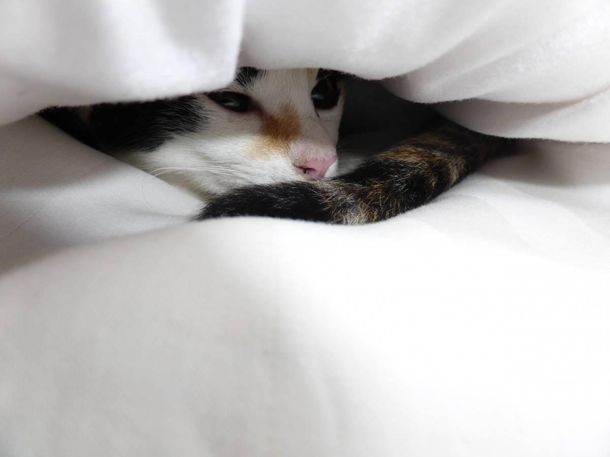 Зачем кошка прячется под одеяло?
