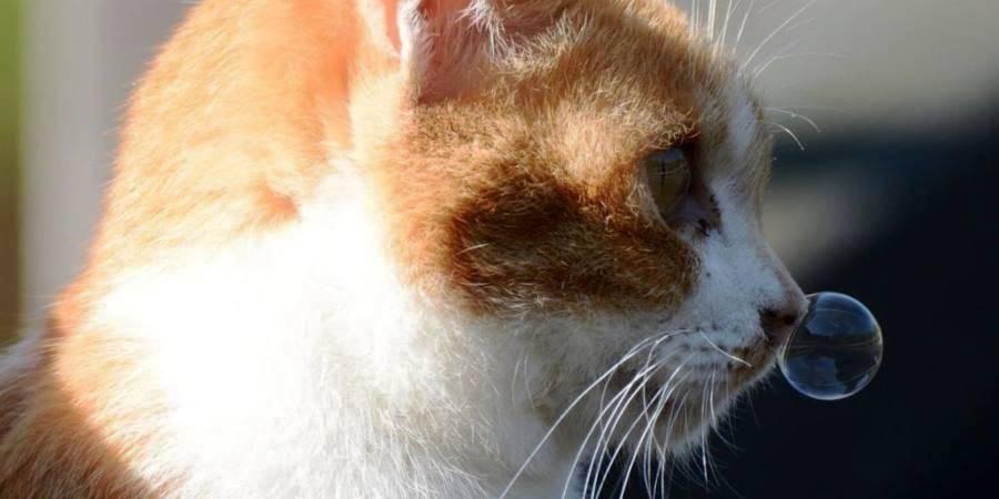 Ринит насморк у кошек и котов
