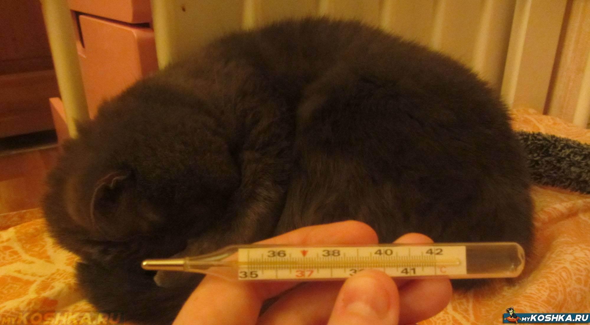 Как правильно измерить температуру у кошки, термометры и инструкция