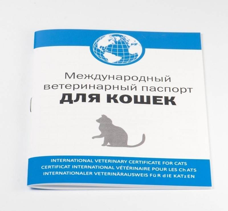 Документы на собаку: сертификаты за границу, паспорт, тест антитела