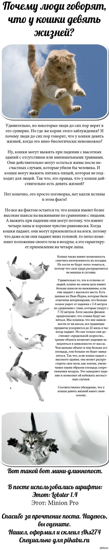 Почему у кошек 9 жизней: в чем особенность домашнего питомца