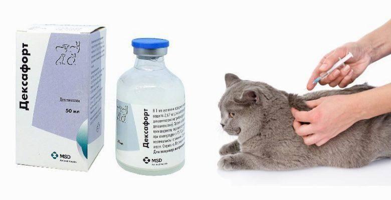Как давать дексафорт кошкам