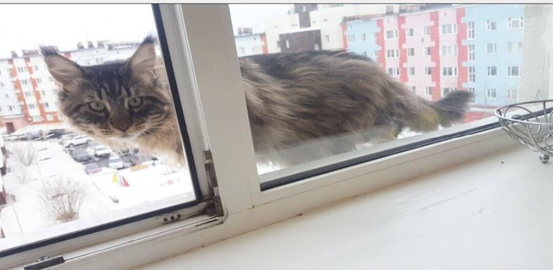 Проблемы с опорно-двигательным аппаратом у котёнка - болят задние лапы у кошки - запись пользователя котя (kotyusik) в сообществе домашние животные в категории кошки. болезни, прививки, советы по уходу - babyblog.ru