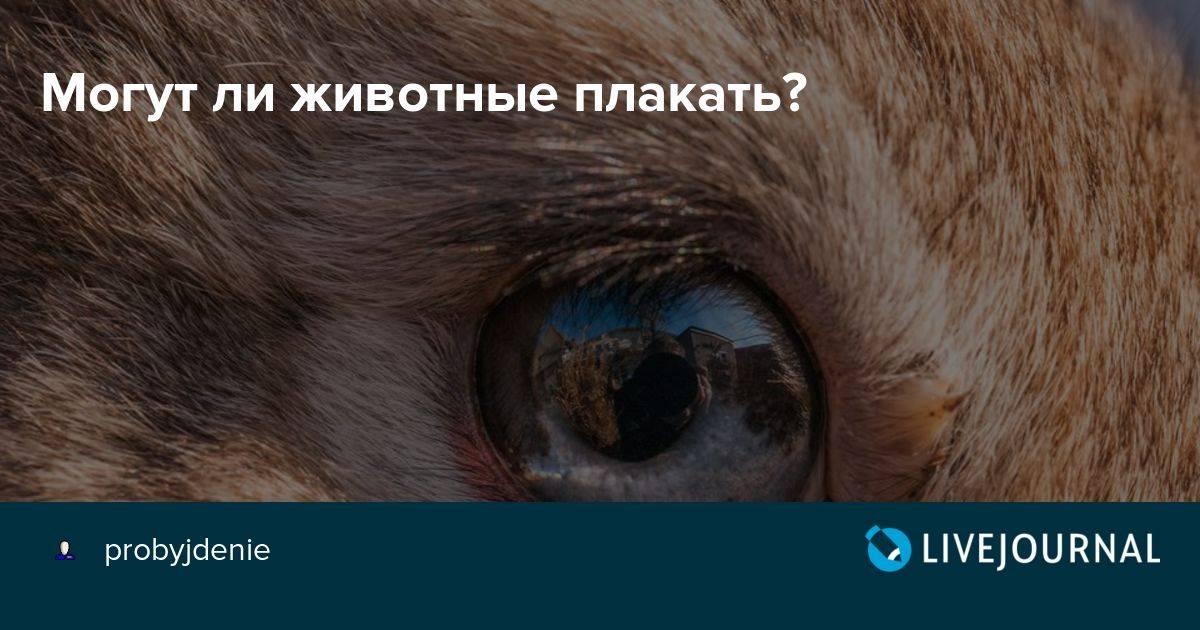 Почему кошка плачет: причины, лечение