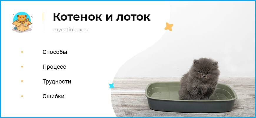 Как приучить котенка к туалету (лотку): инструкция для владельцев!