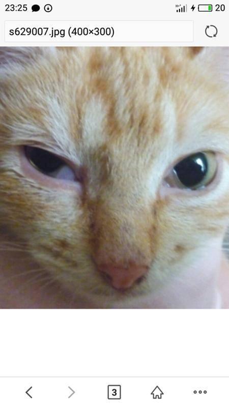 У кошки на глазах пленки - ответ медика