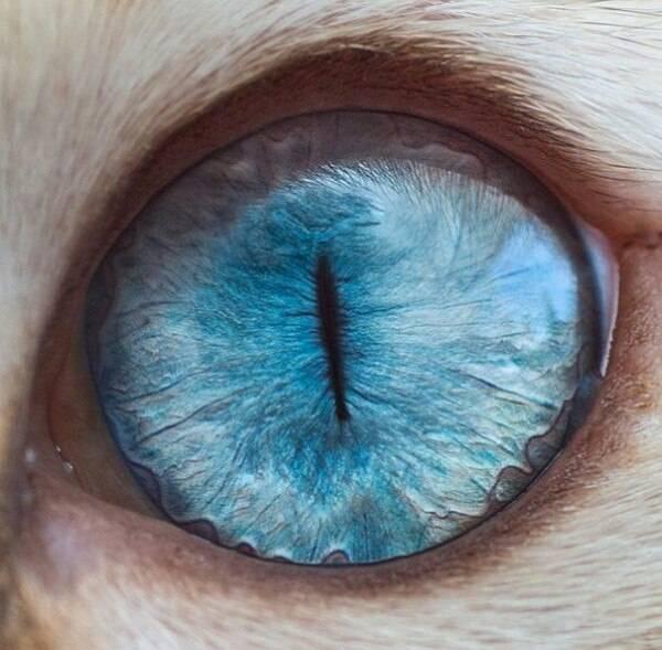 Очи черные: 7 причин, почему у кошки сильно расширяются зрачки