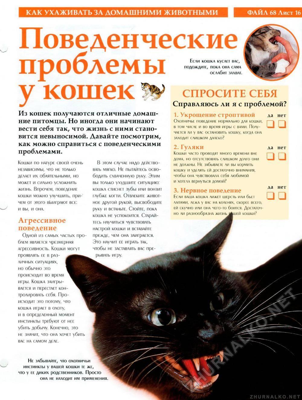 Кто в доме хозяин, или как отучить кота кусаться и царапаться