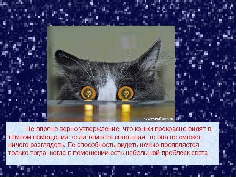 Тайная жизнь домашних животных: 5 интересных фактов о кошках и собаках // нтв.ru