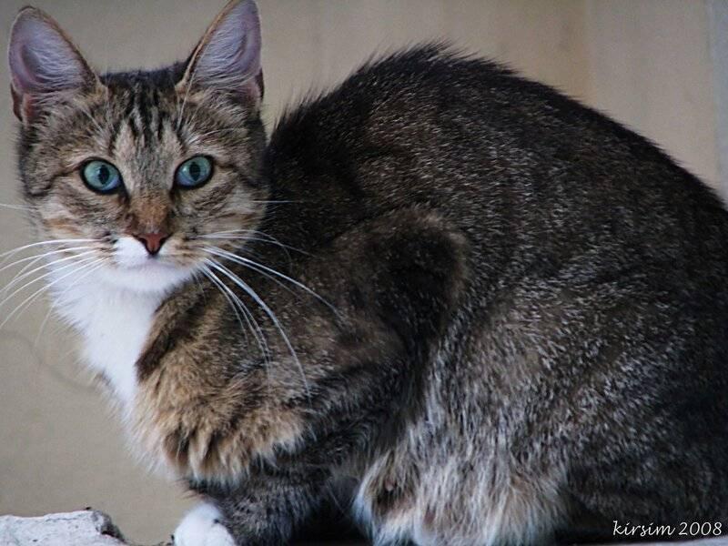 Виды окрасов у беспородных кошек - oozoo.ru
