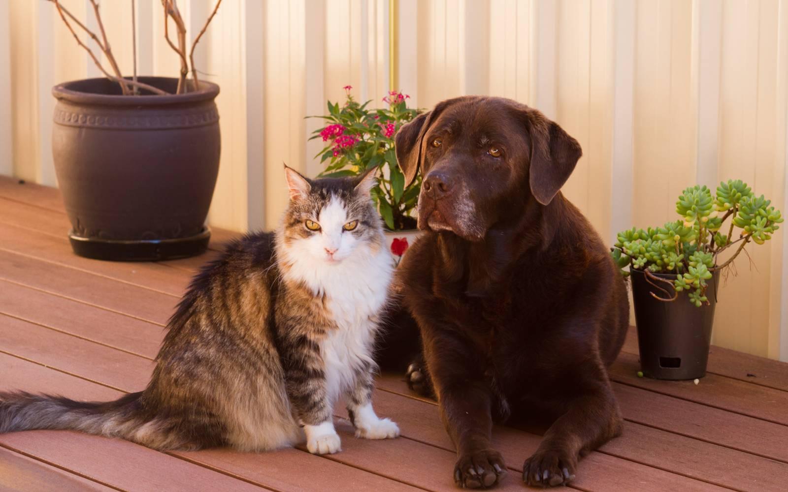 Как подружить кошку с собакой в квартире?