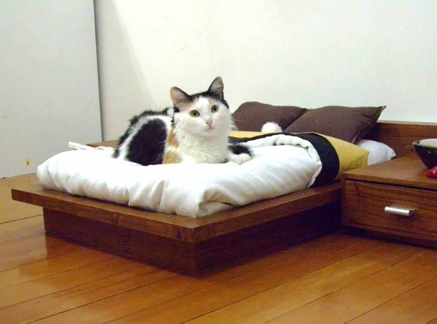 Мебель для животных: 7 уютных идей, которые сделают жизнь домашних питомцев и их хозяев комфортной