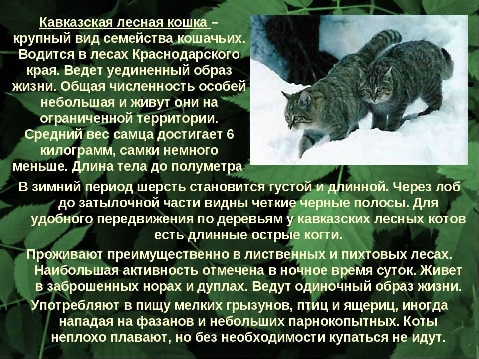 Як животное. описание, особенности, виды, образ жизни и среда обитания яка