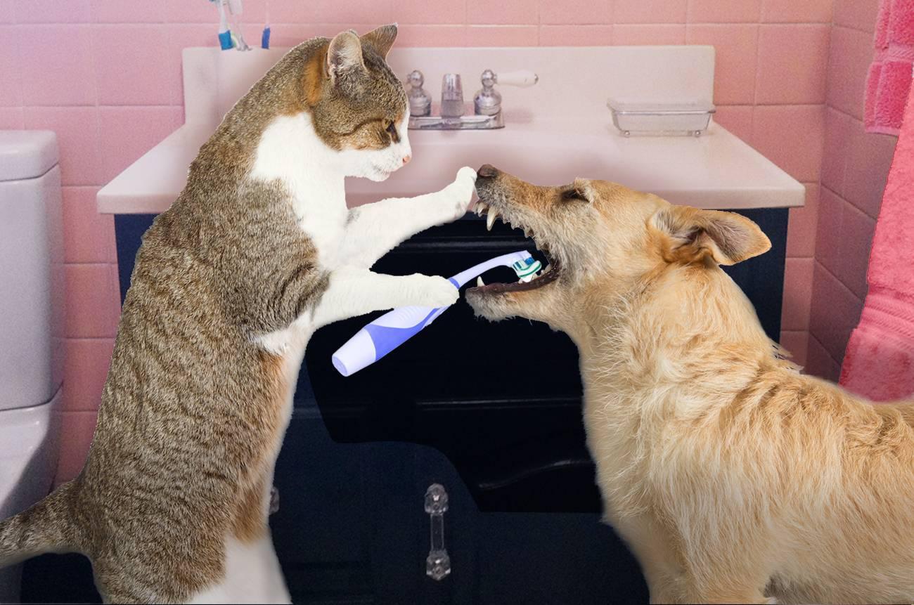 Правильная чистка зубов у кошек
