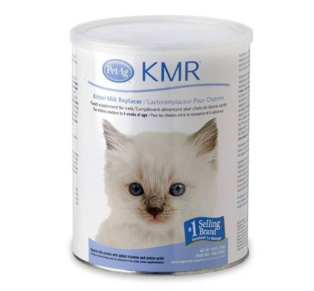 Котята и молоко: сложнейшие отношения – стоит ли давать такую еду?