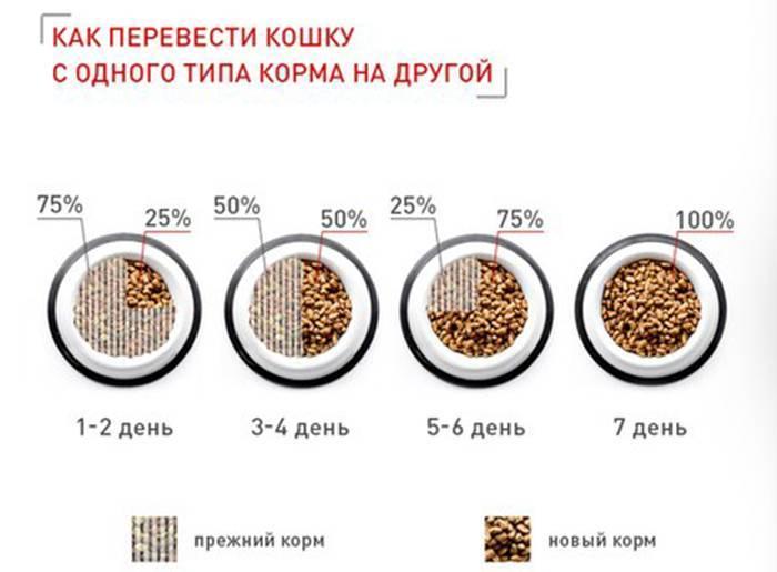 Как приучить котенка к сухому корму: в 2, 3 или 4 месяца, британца или шотландца