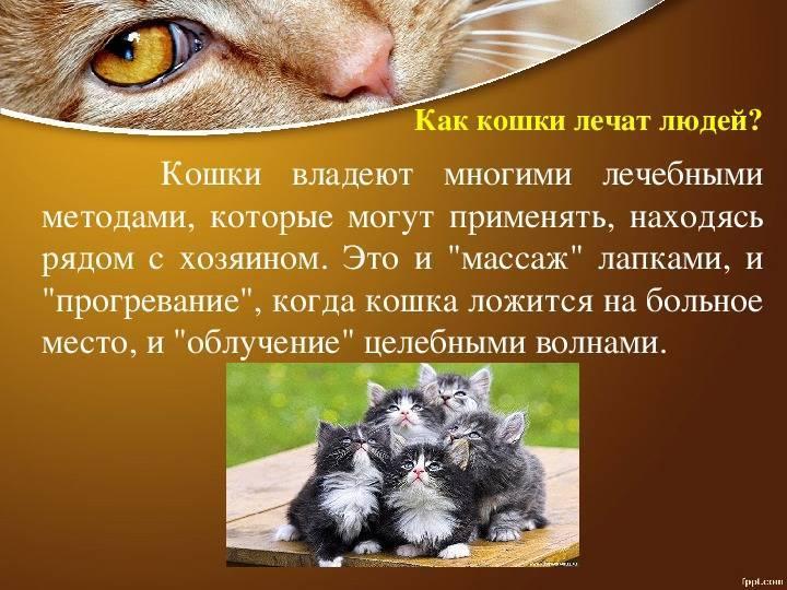 Кошки лечат болезни людей или что такое кошкотерапия