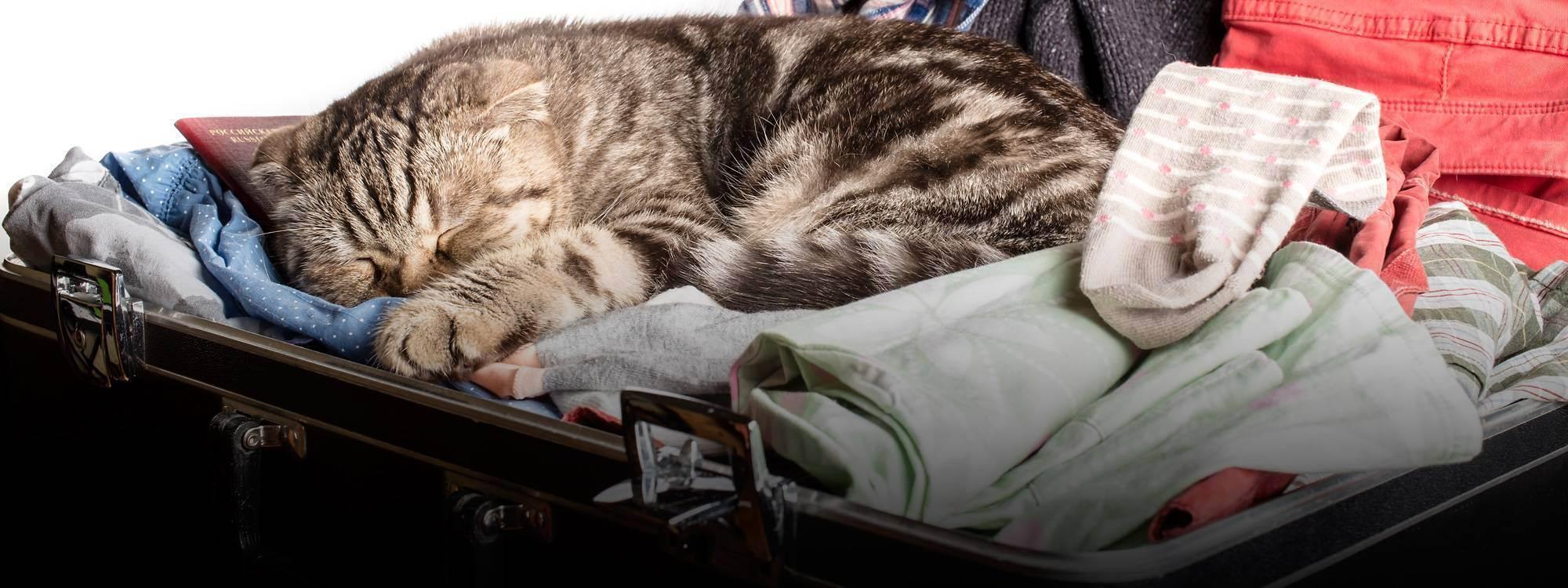 Долететь живым: как надежно и правильно перевозить котов в самолете