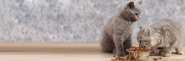 Витамины для старых кошек — выкладываем суть