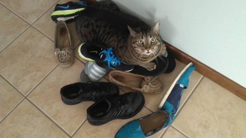 Как отучить кошек гадить в подъезде: лучшие методы борьбы как отучить кошек гадить в подъезде: лучшие методы борьбы