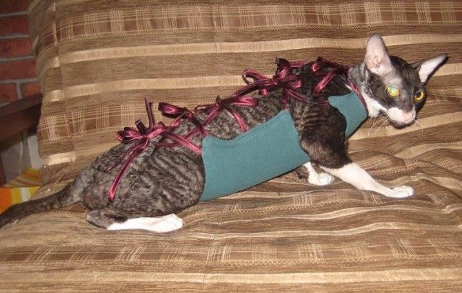 Попона для кошки после стерилизации: как надеть и снять, выкройка