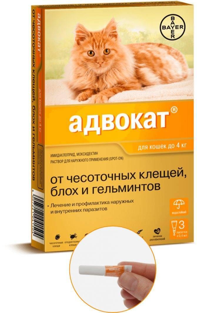 Капли на холку от глистов и блох для кошек
