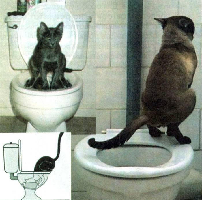 Когда котята начинают какать и сколько раз в день они должны это делать?