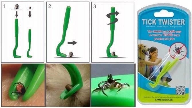 Как вытащить клеща у кота в домашних условиях