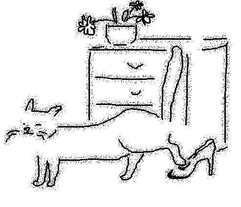 Как отучить кошек гадить в подъезде: 10 способов борьбы народными и современными методами