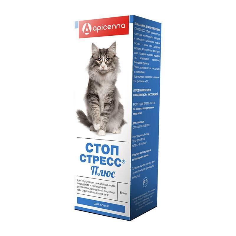 Успокоительное для кошек: когда может понадобиться, как выбрать, как давать