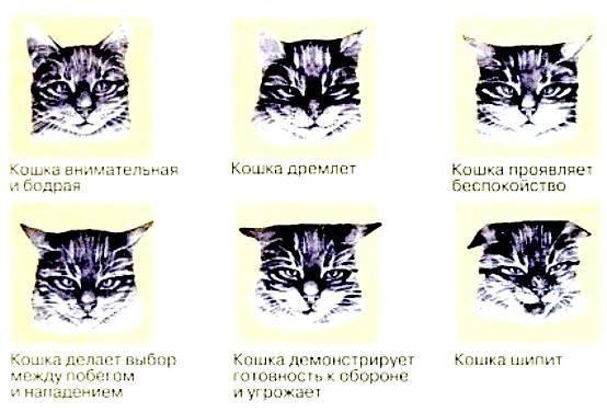 Если кот смотрит в одну точку и беспокойно себя ведет