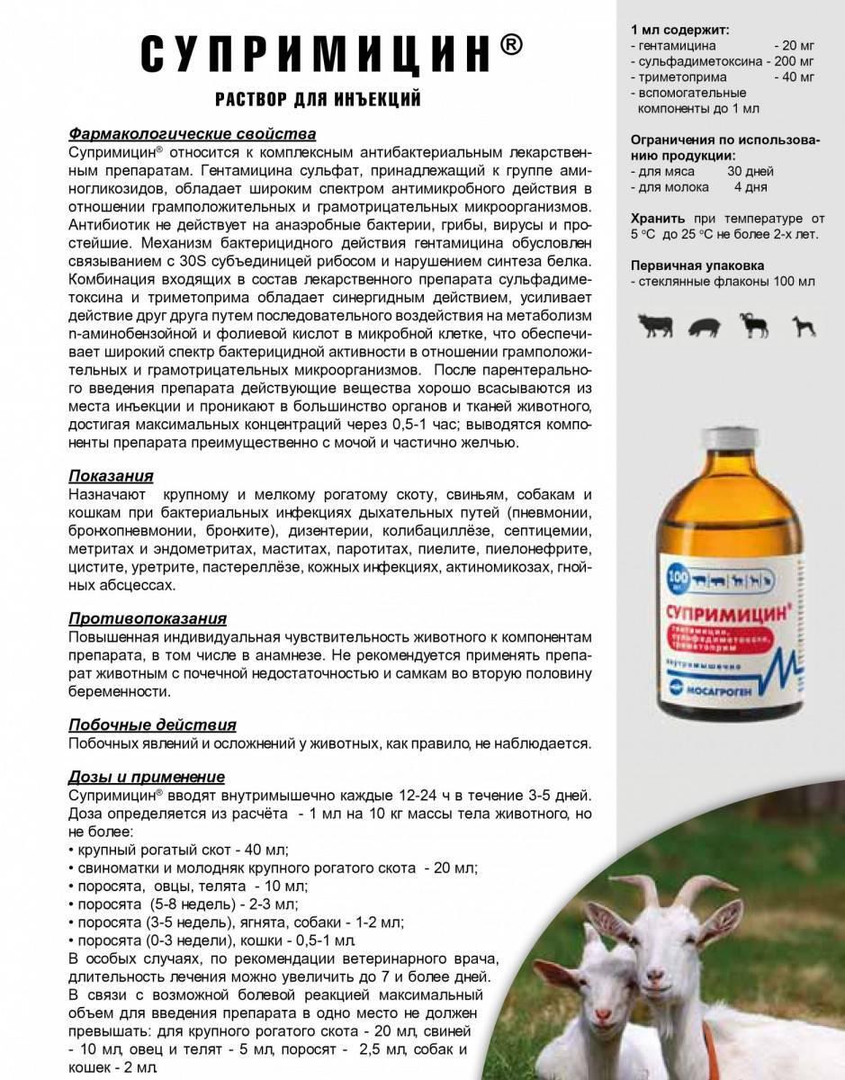 Энромаг для собак: инструкция по его применению в ветеринарии