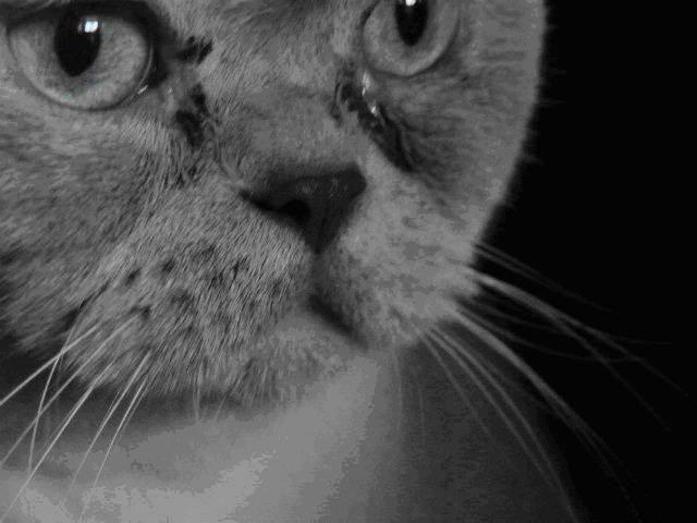 Если у кошки глаза слезятся, что делать в домашних условиях?