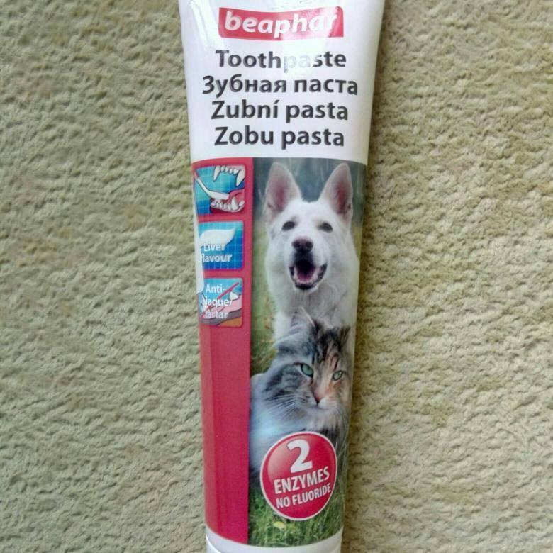 Как почистить зубы кошке и котенку: выбор зубной щетки и пошаговая инструкция
