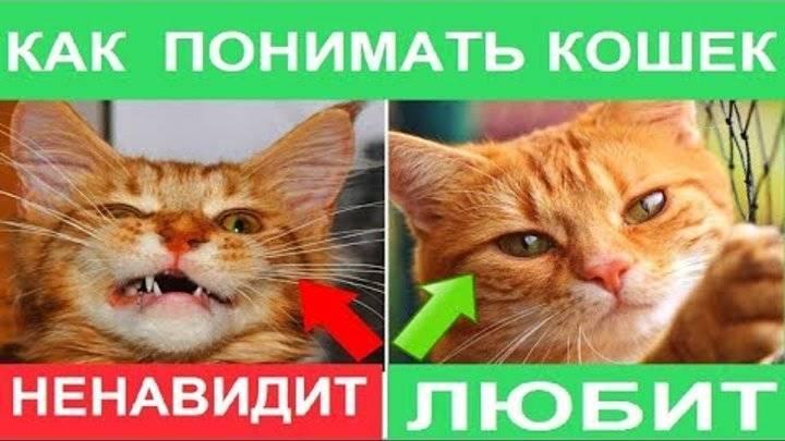 Как отличить кота от кошки: полезные советы